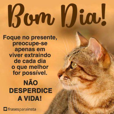 Bom Dia, Não Desperdice a Vida 7