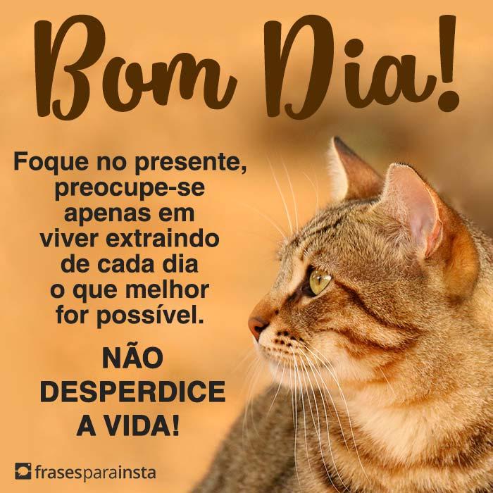 Bom Dia, Não Desperdice a Vida