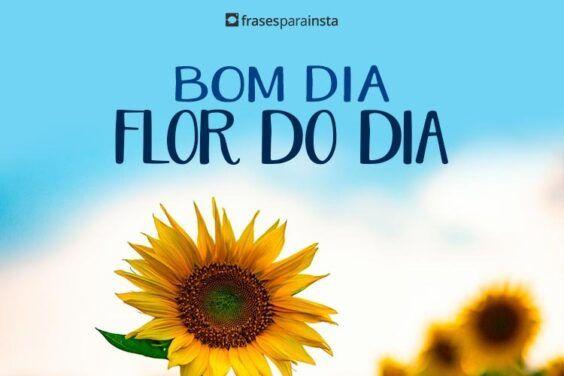 Bom Dia Flor do Dia 4