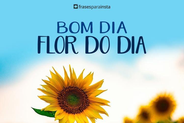 Bom Dia Flor do Dia 6