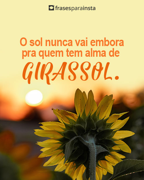 Frases de Girassol: Mostre a Luz que há em Você