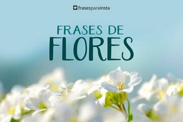 Frases de Flores para Foto Sozinha